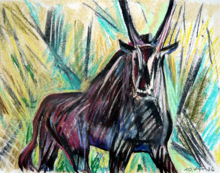 Stehender Antilopenbock – Oktober 1974