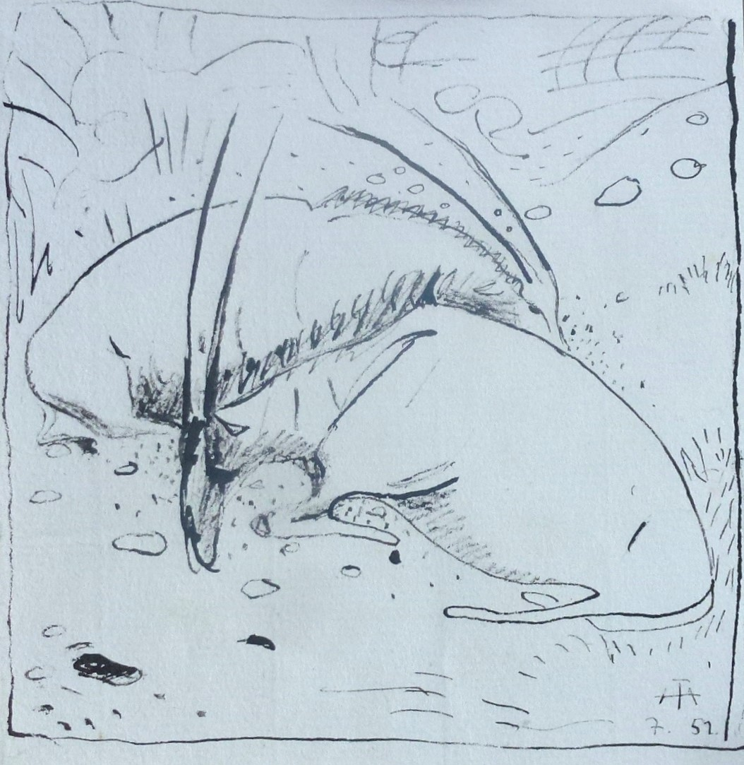 Zwei liegende Antilopenböcke – Juli 1951