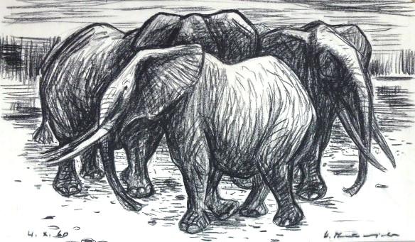 Drei Elefanten – Oktober 1960