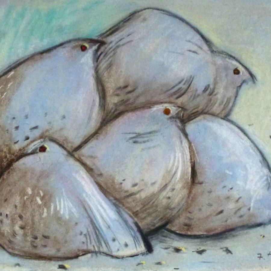 Fünf kuschelnde Steppenhühner – Juli 1979